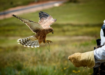 Dullstroom bird of prey centre